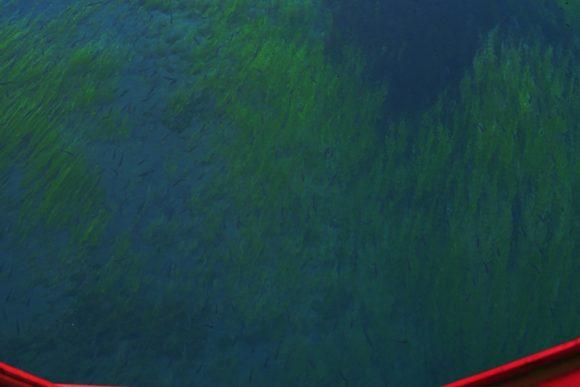 小さい黒い点がおそらくヒメマスです。一緒に泳ぎたい。