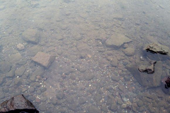冷たい湖。ハゼっぽい魚がいた。
