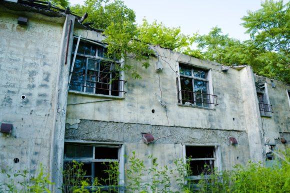 屋根の上からも植物が覆う。