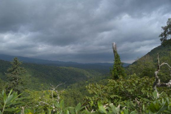 恵庭方面の森林。雲行きが怪しい。