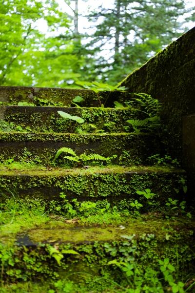 苔の階段も苔テラリウムみたいで素敵です。