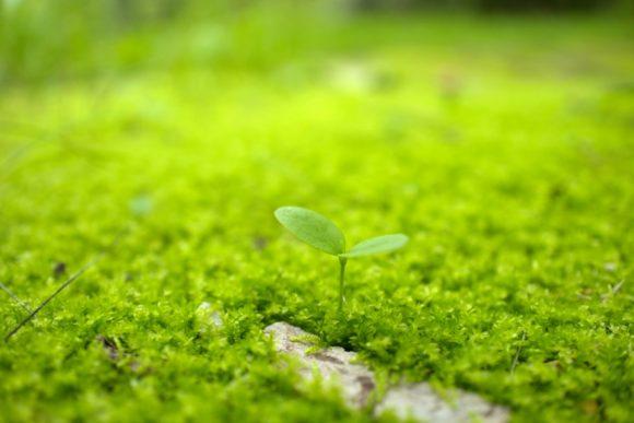 若葉が芽生え、生命の息吹を感じるぜ。
