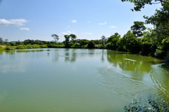 池をのぞくと鴨が慌てて飛び立った。