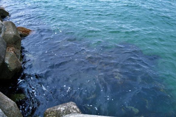 海藻が濃いブロック下。根魚いそう…