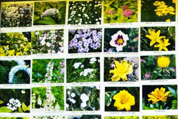 【抜粋1】風のガーデン7月に咲いていた花