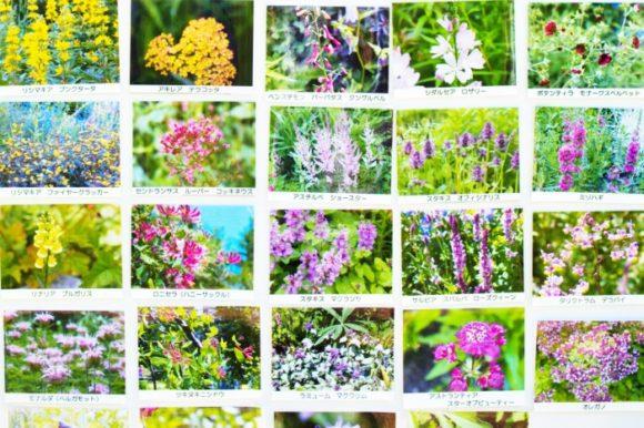 【抜粋2】風のガーデン7月に咲いていた花