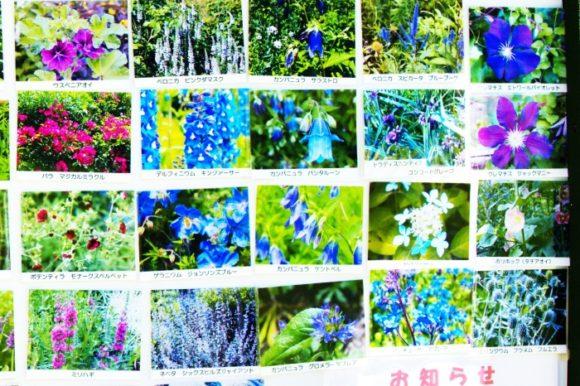 【抜粋3】風のガーデン7月に咲いていた花