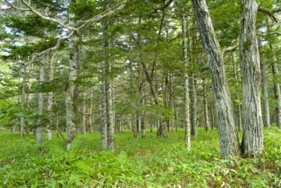 深い森の中を進みます。