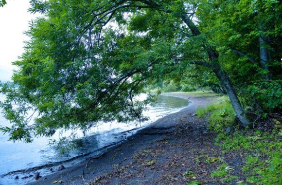 湖のほとりを散歩できる。