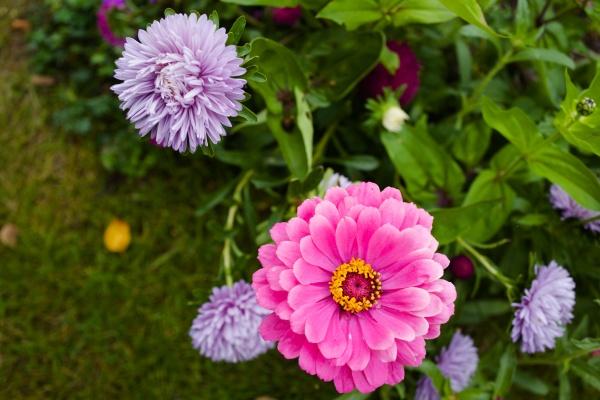 SNS映えしそうな花です。