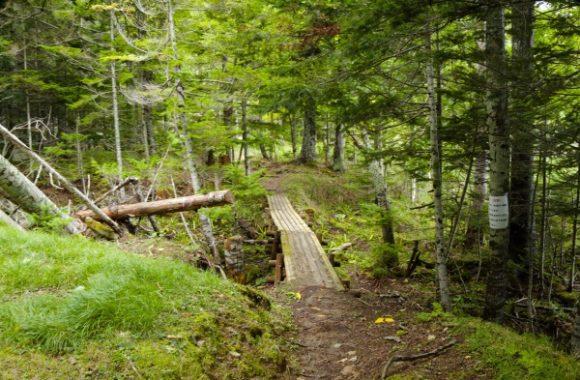 森林を進む。