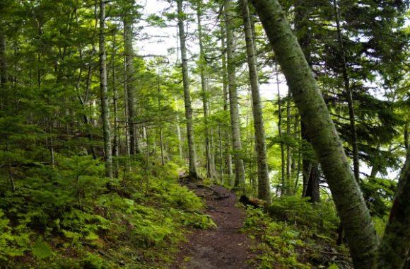 森の中をトレッキング