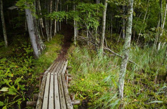 森へ深く入る。ちょっと不気味。