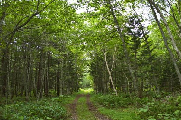 美しい林道。緑が濃い。