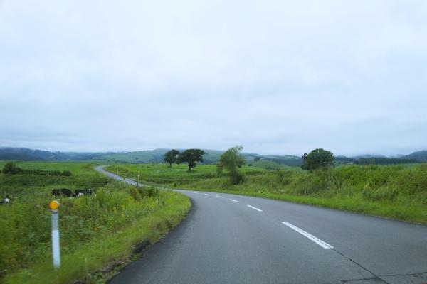 曇っていると幻想的に見える牧場。