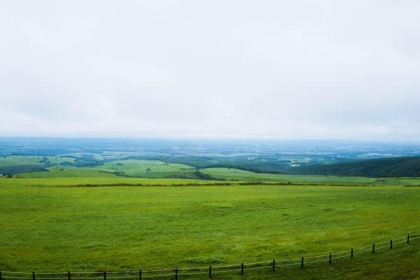 広大過ぎる牧草地を眺めてバーガーを待つ。