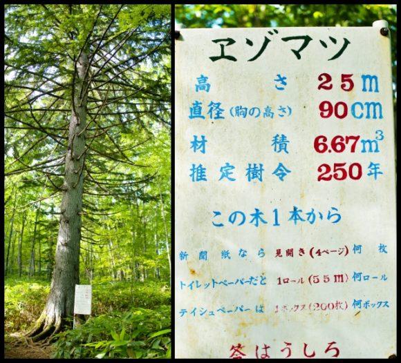 この木1本からどれだけのトイレットペーパーがとれる?答えは後ろ。