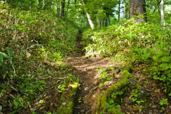 細い山道を進む。
