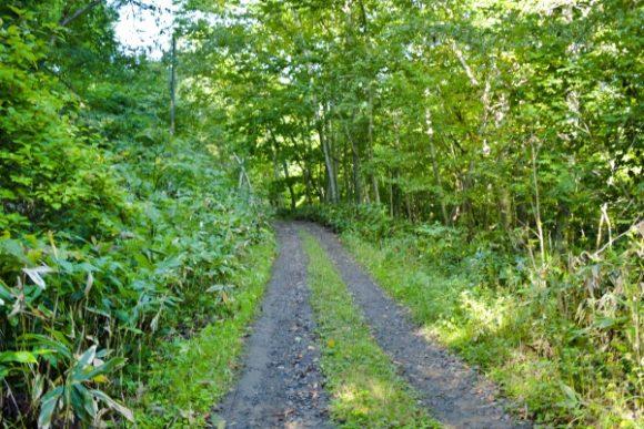林道を歩く。