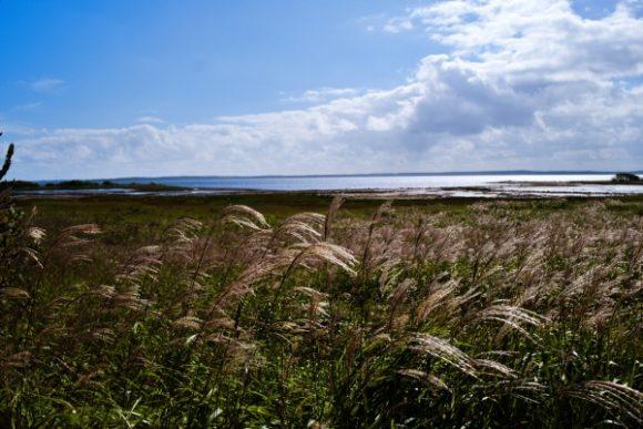 9月はすすきが半島になびく。