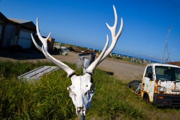 印象的な骨と廃車。