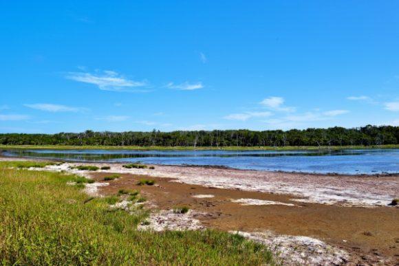 ナラワラの前は湿地だ。
