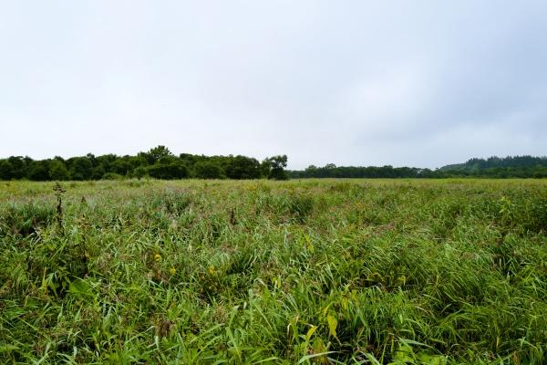 それにしても広い湿地帯だ。