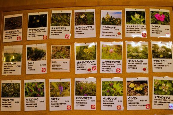 植物好きにはたまらない図録ですね。