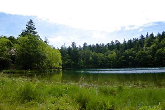 森のシルエットも素敵な沼です。