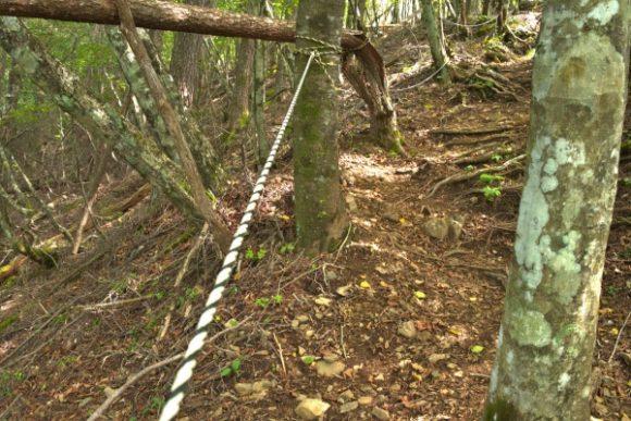 ロープを使って山頂を目指す!