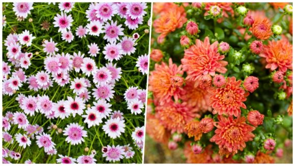 鮮やかな花の数々!