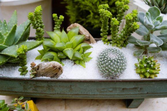 爽やかな雰囲気の多肉植物の寄せ植え。