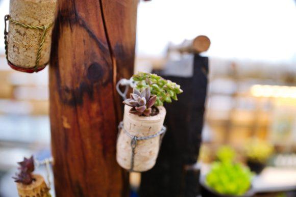 コルクをくりぬいて多肉植物を植えるなんてアイデアがすごい。