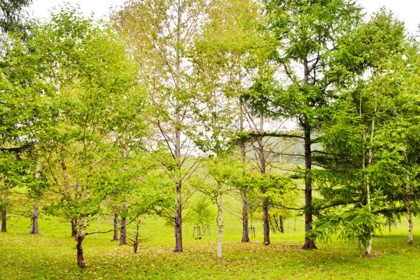 淡く秋めいていく木々が美しい。