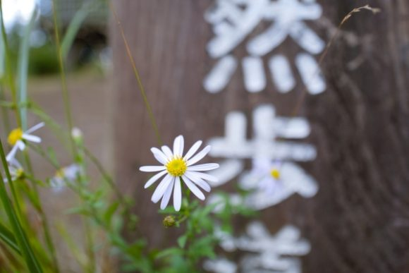 花がさりげなく咲いてます。