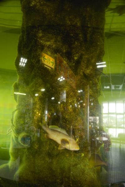 円柱水槽で魚が泳ぐ