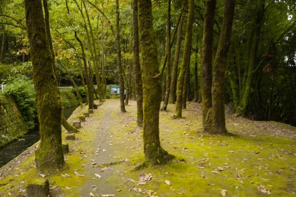 ホタルの生息地の林を歩く。