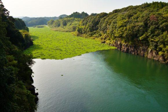 水草に覆われた湖もエコですね。