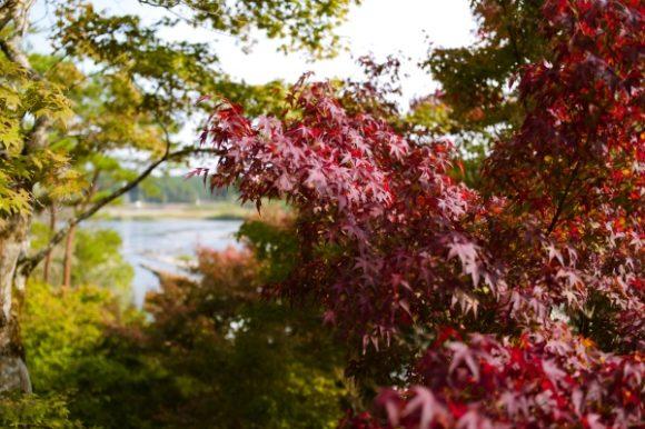 緑と赤が入り混じる紅葉。