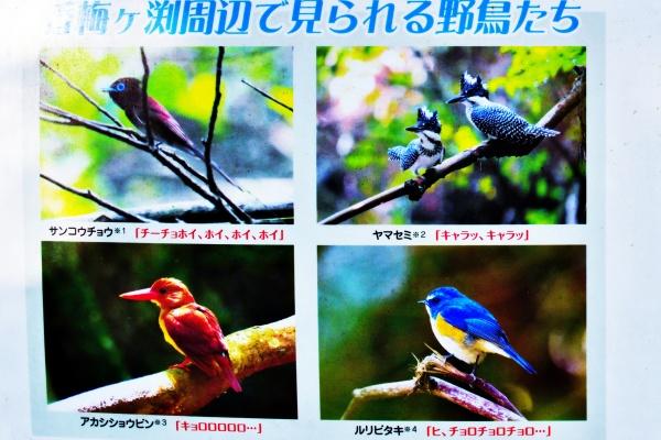 香梅ヶ渕で見られる野鳥