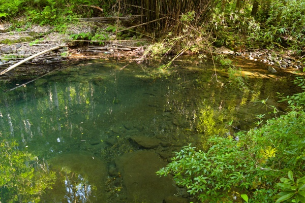 渓流魚がいそうな川。
