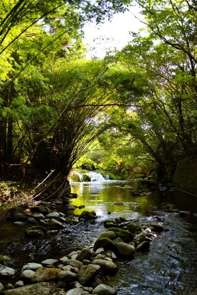 川遊びしたくなる川辺。