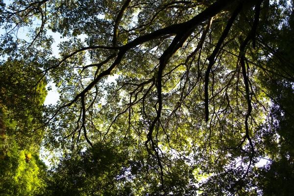 木陰が気持ちいい香梅ヶ渕