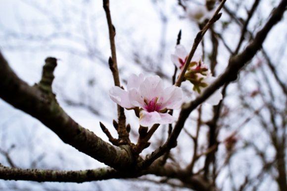 鹿児島の11月は春らしい。