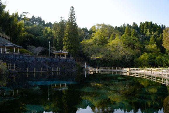 緑豊かな丸池湧水公園の朝。