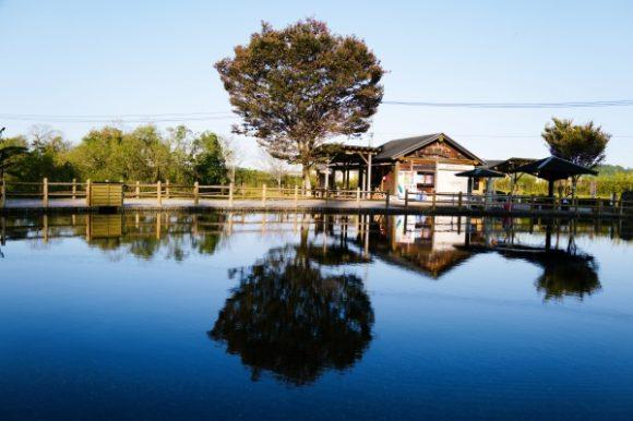 鏡のように反射する丸池湧水。