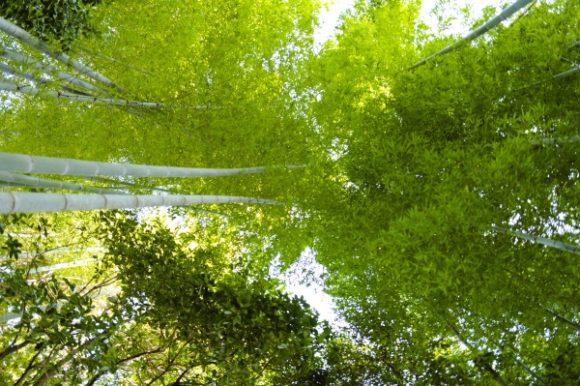 竹林の天の川や~!