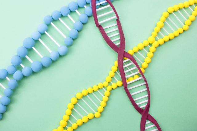 心臓,健康管理,ジーンクエスト,ダイエットブログ,おすすめ,ハゲ,遺伝子検査,筋肉,個人情報,寿命,ゲノム解析,わかること,ランニング,持久力,祖先,コロナ,COVID19,危ない,やってみた,結果,酒,ユーグレナ (1)