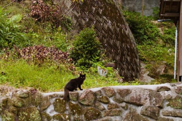 フサフサ尻尾の黒猫。