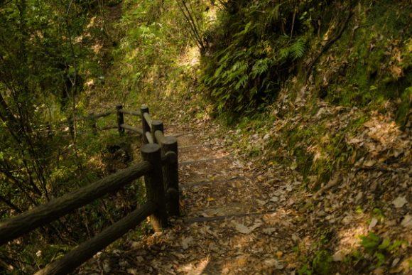 山道はトレッキングシューズがおすすめだ。